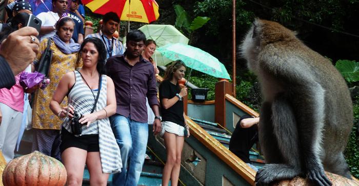 Monkey preying on tourists at Batu Caves