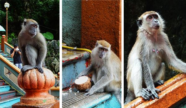 Monkeys at Batu Cave, KL