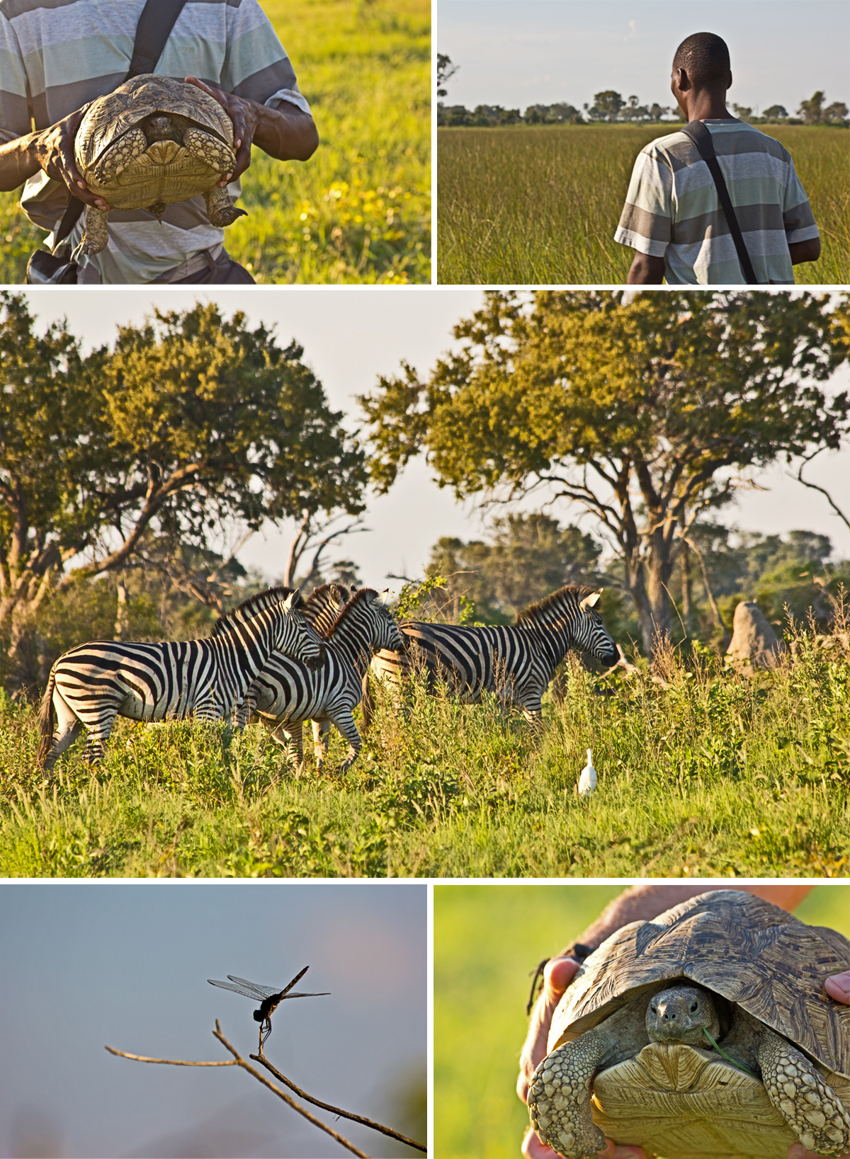 Bushwalk through the Okavango Delta