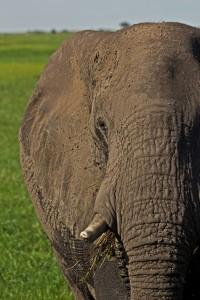 Chobe River Sunset Cruise Elephant