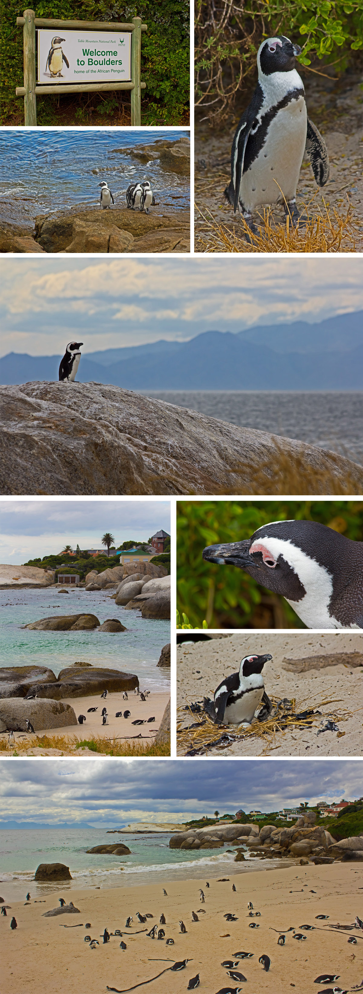 Blue Monkey Tours Review - Boulders Beach Penguins