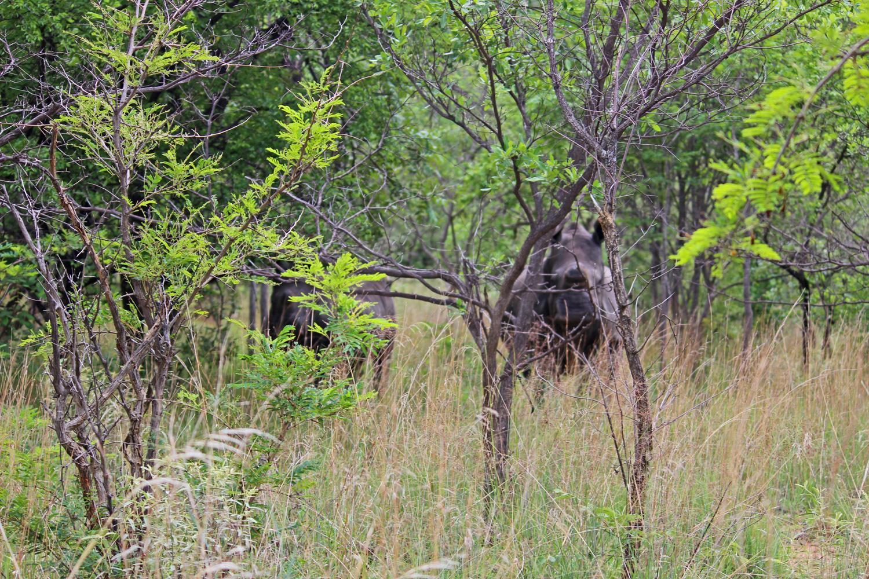 Trekking White Rhino by foot in Matobo National Park