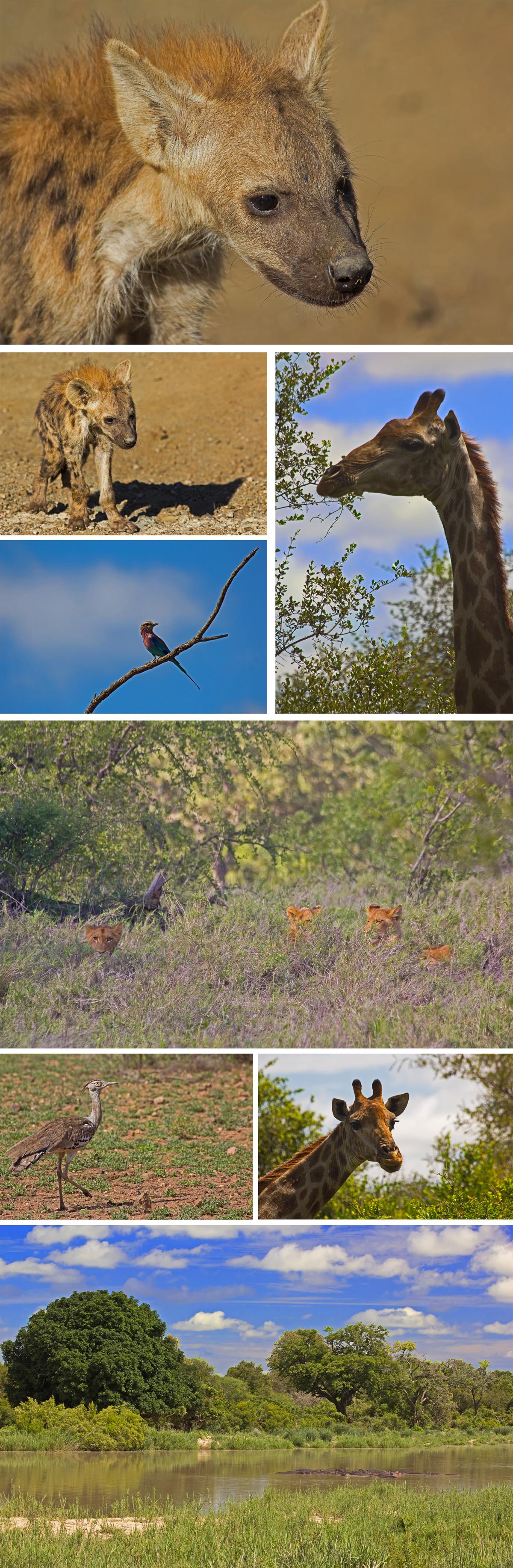 Kruger National Park Game Drive
