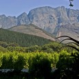 After my crazy 15-day G Adventures camping experience through South Africa, Botswana, Zimbabwe and Zambia, I set aside a short two days to explore Cape Town; particularly Stellenbosch Wine Region and the Cape Peninsula.