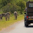 What better way to ring in 2014 than a New Years Day game drive through Kruger National Park in South Africa? So many sightings, including three of the Big Five!