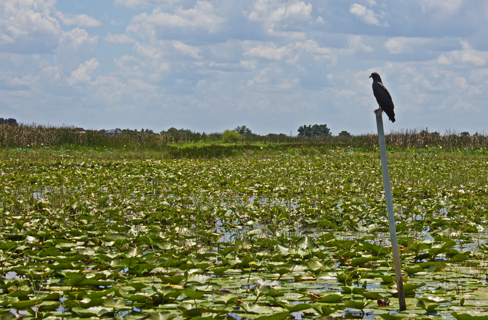 Orlando Airboat Tours