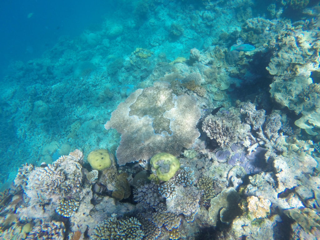 The Great Barrier Reef with Seastar Cruises